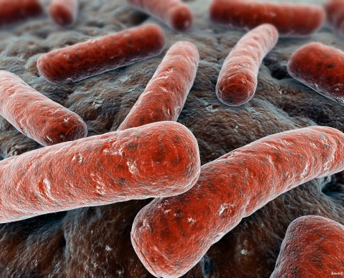 iStock_000016054341_Eraxion_Bakterien_rot