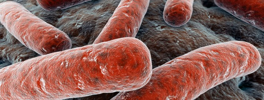 Bakterien sind die Verursacher für die meisten Zahnschmerzen